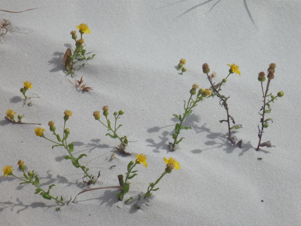 Some sand art.