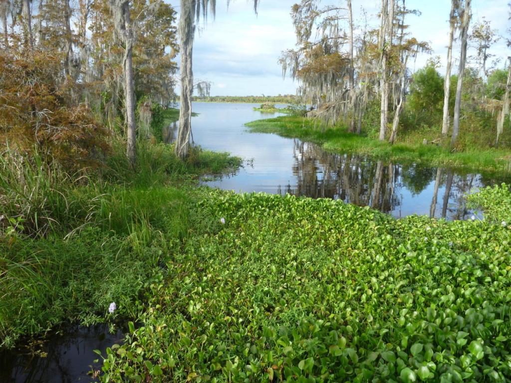 A bayou.