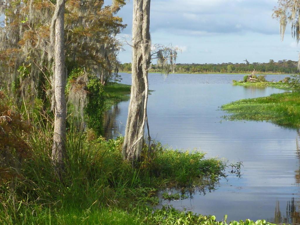 Pretty bayou.