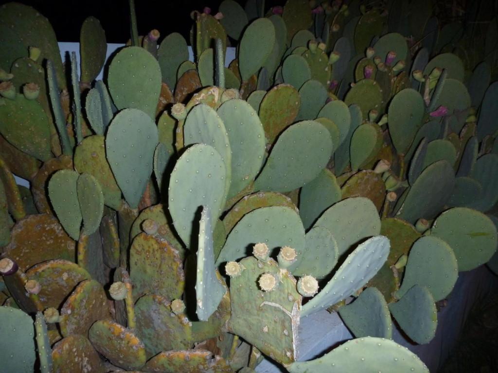 Nice cactus.