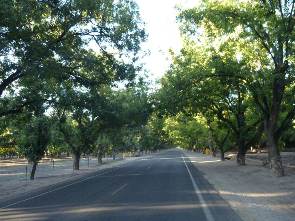 Eight miles of this 2nd largest pecan farm in the world.