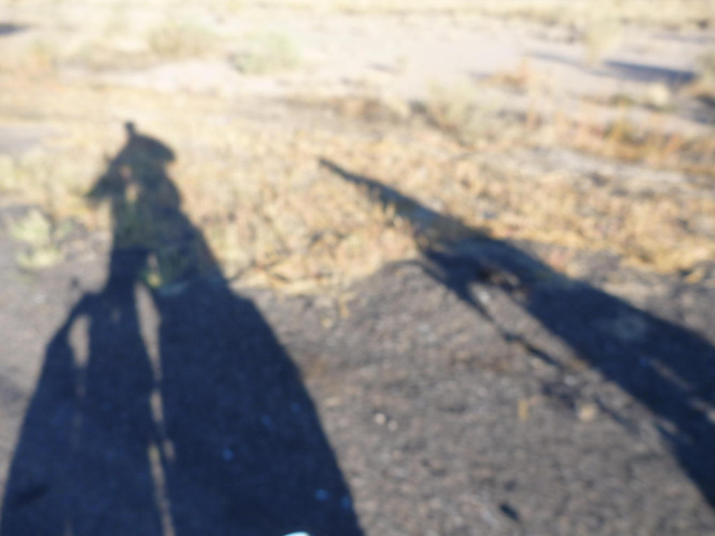 Tall shadows in the early morning from Deming.