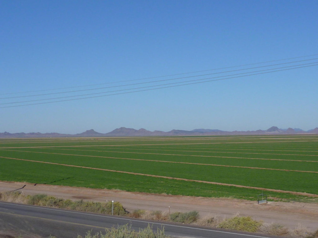 Farmland west of Gila Bend instead of the expected desert.