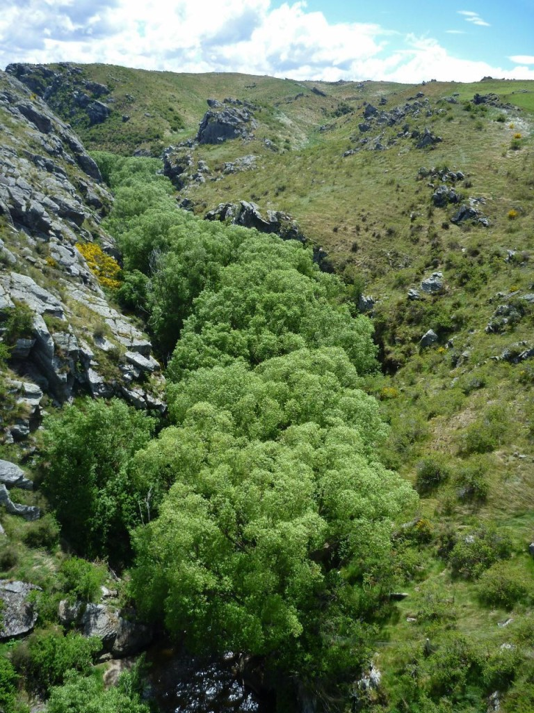 A tree lined gorge.