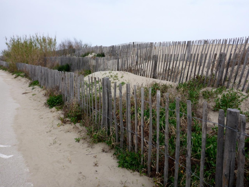 Very effective use of multiple sand fences.