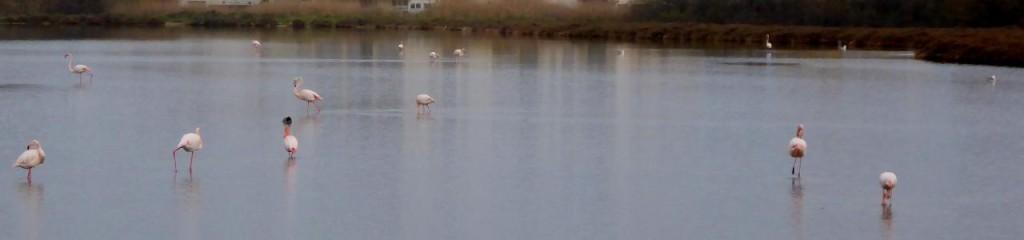 Pink flamingos?