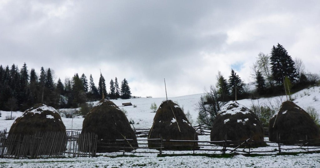 I believe these huts store hay.