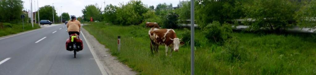 Local grass control.