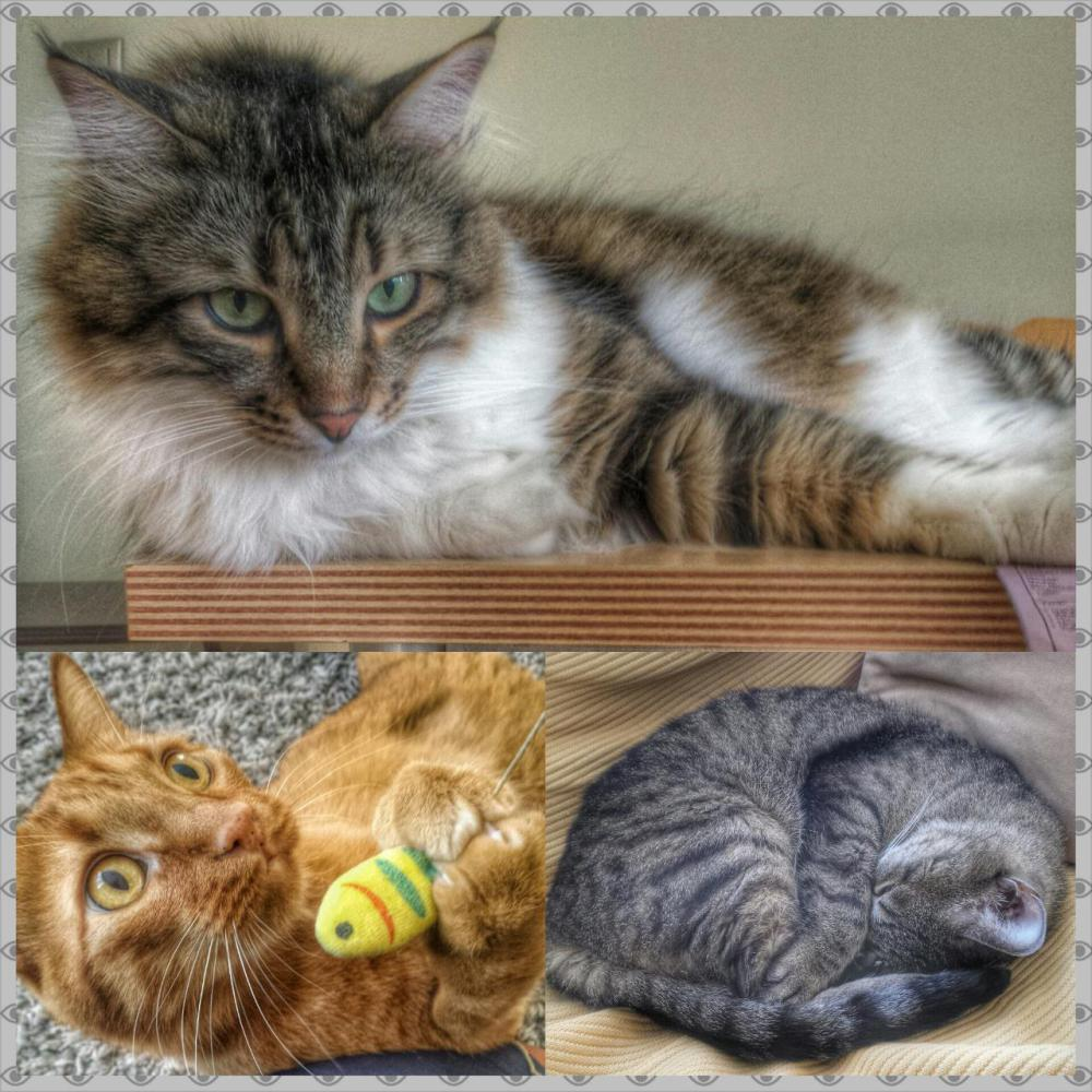 Deniz and Banu's cats by Jocelyn.