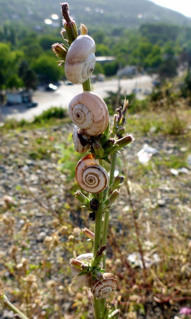Interesting snails.