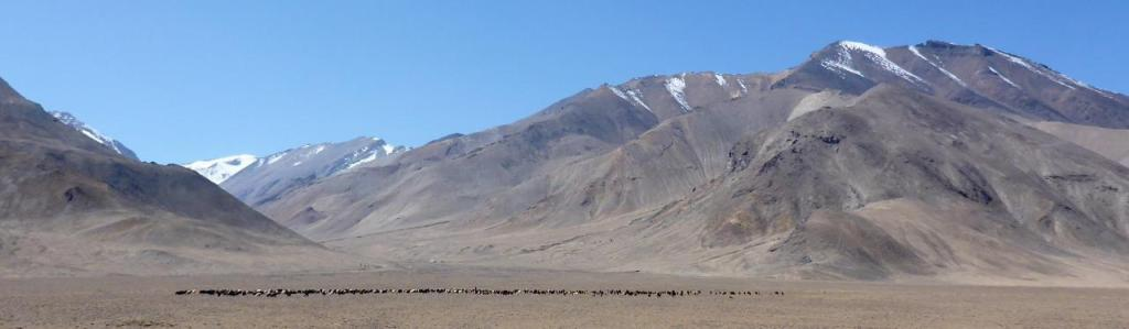 Sheep grazing on this beautiful Tajik plain.
