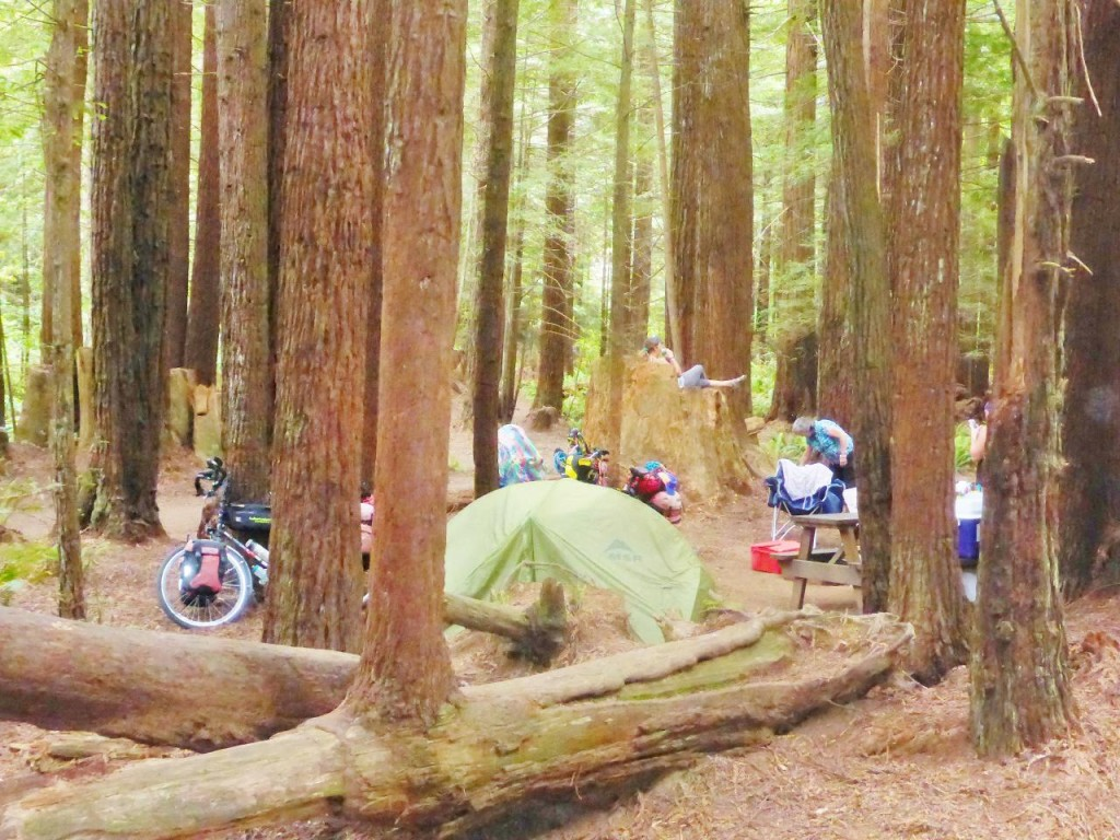 Our camp in the Redwoods.
