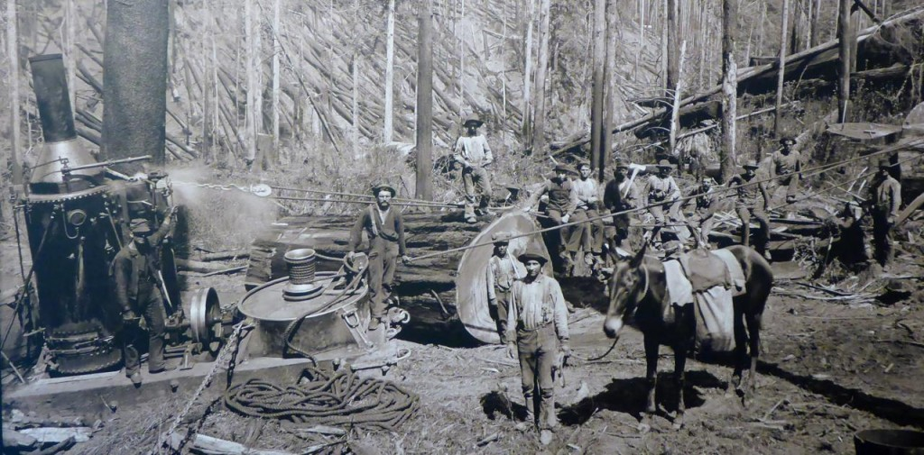 "The ""steam donkey"" introduced in 1882 could pull a sectioned redwood log. It took the place of 18 oxen. At that time a single redwood tree produced enough wood to build 23 houses."