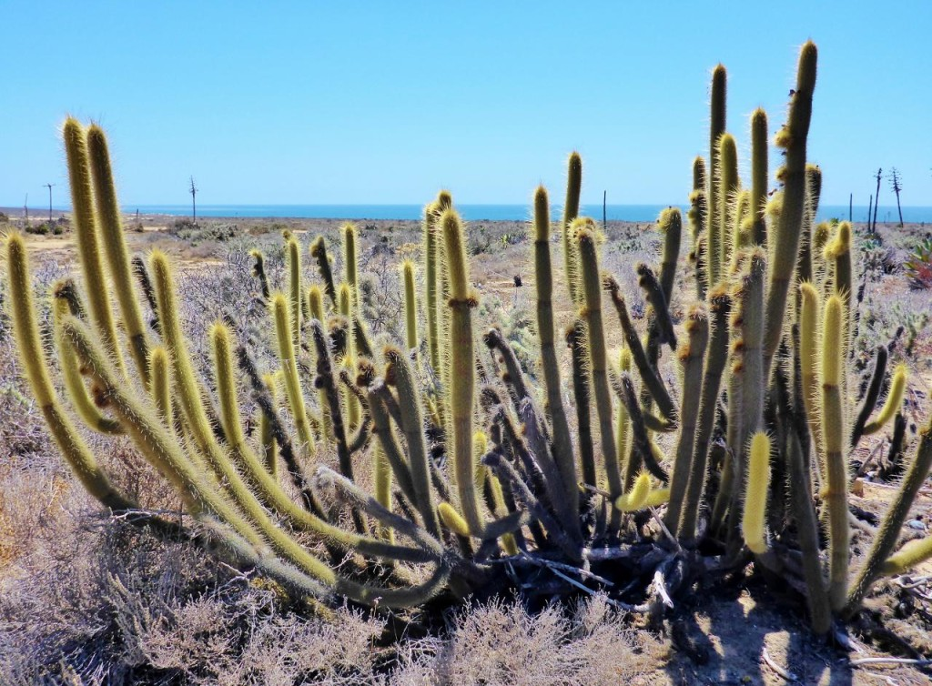 I really like cactus. I also posted lots of cactus pictures from our Southern Tier ride in 2011.