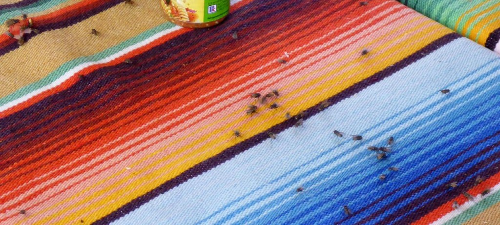 It's a fly's world in Mexico. They like my sunblock so they swarm me. Maybe if I could just ride faster.