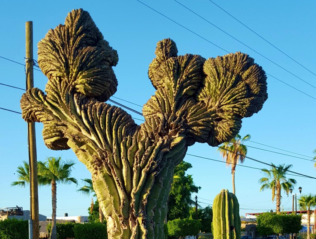 A really cool looking cactus.