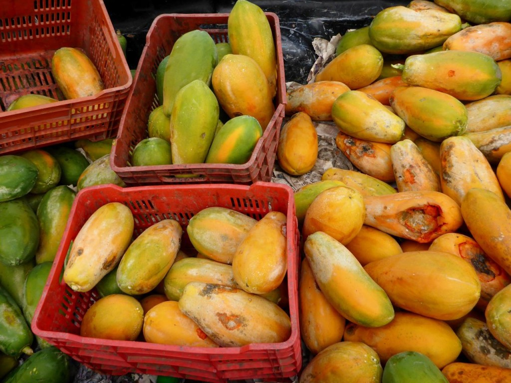 A nice load of papayas.
