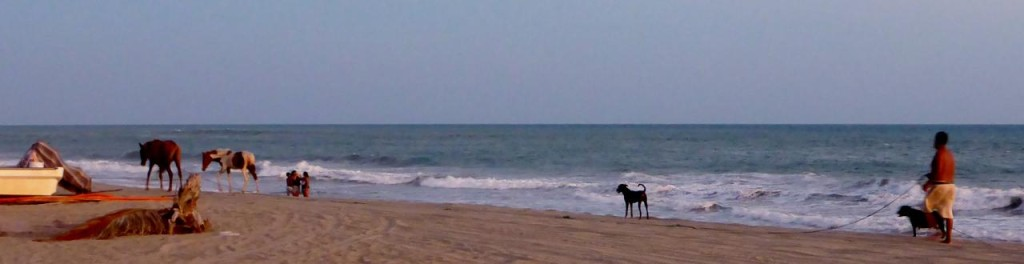 Animals on the beach. Very cool.