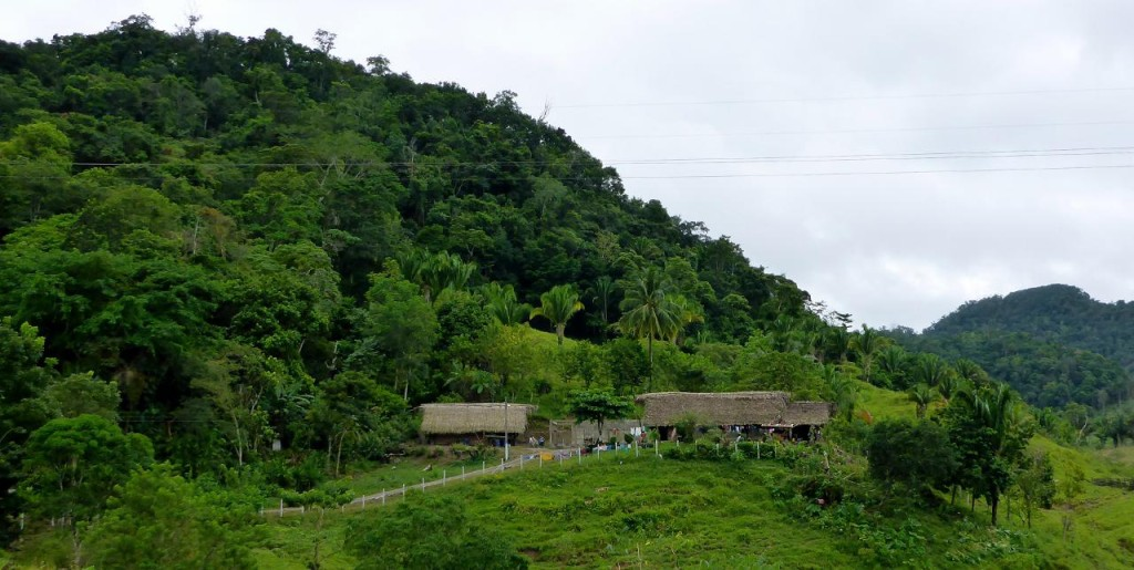 What a nice house in a beautiful jungle. They all waved as we took this picture.