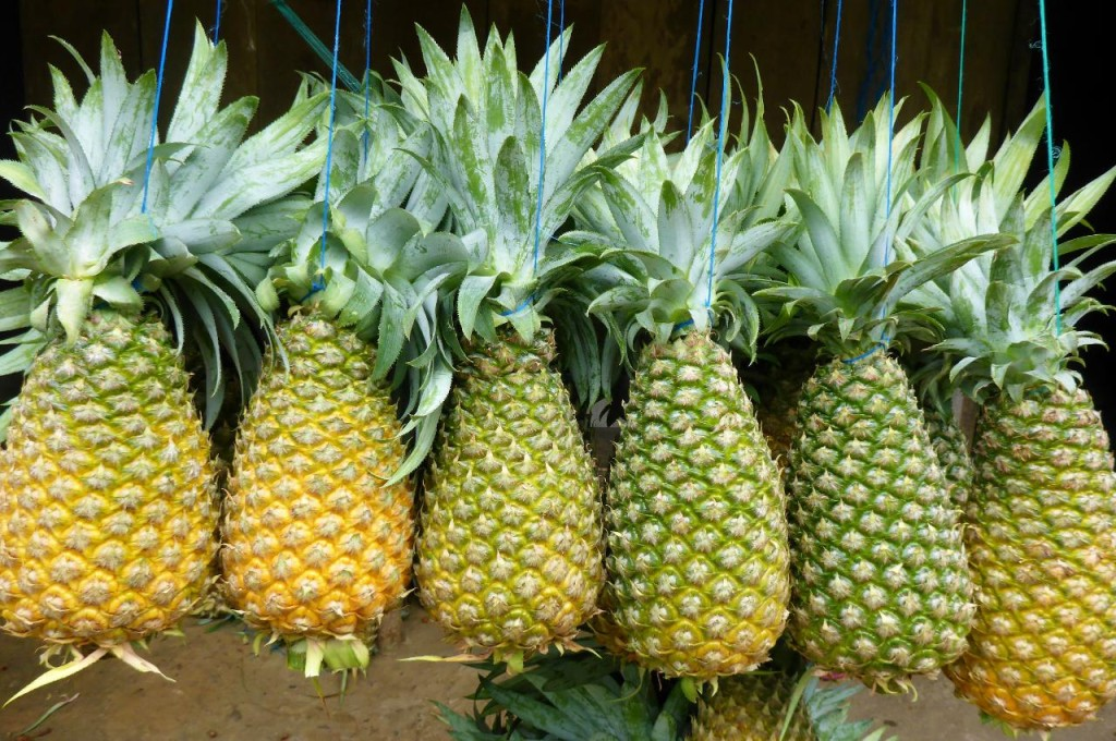 Very large pineapples.