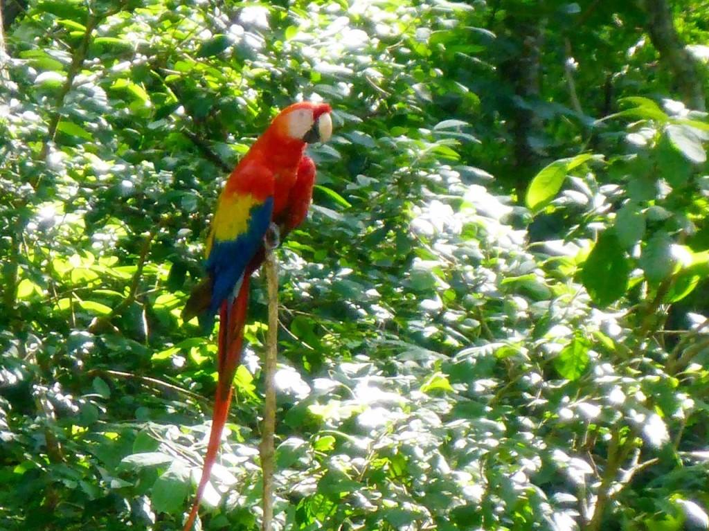 A macaw!