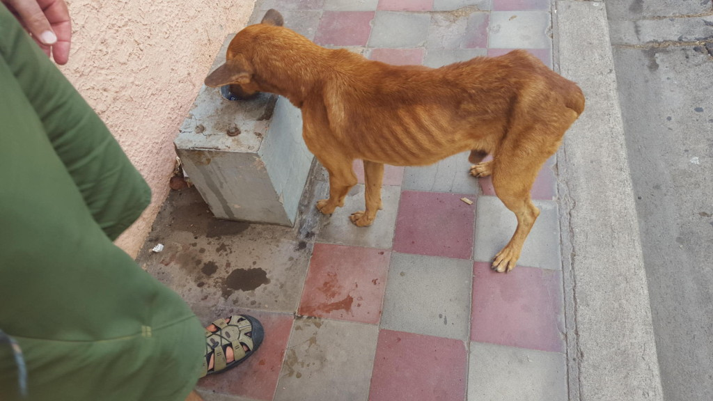 We have fed hungry dogs around the world.
