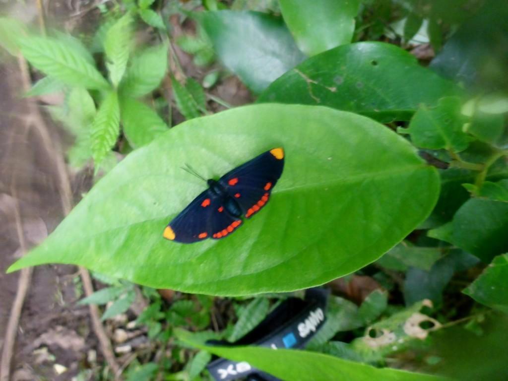 A pretty moth.