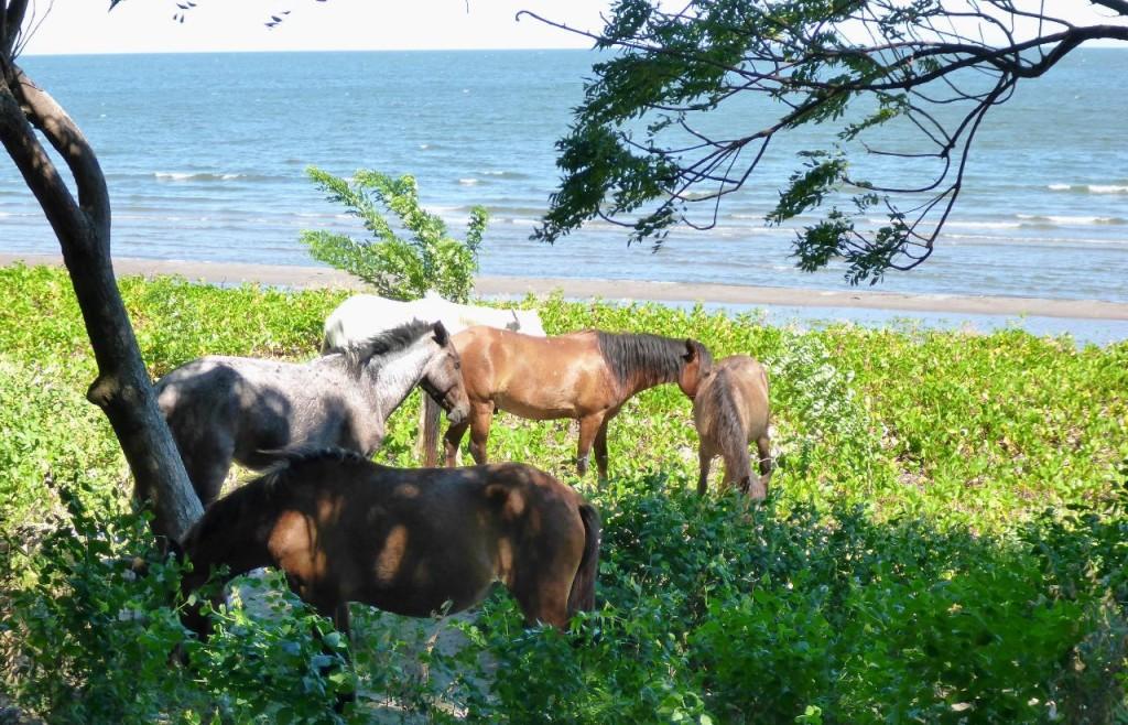 Horses grazing alongside Lake Nicaragua.