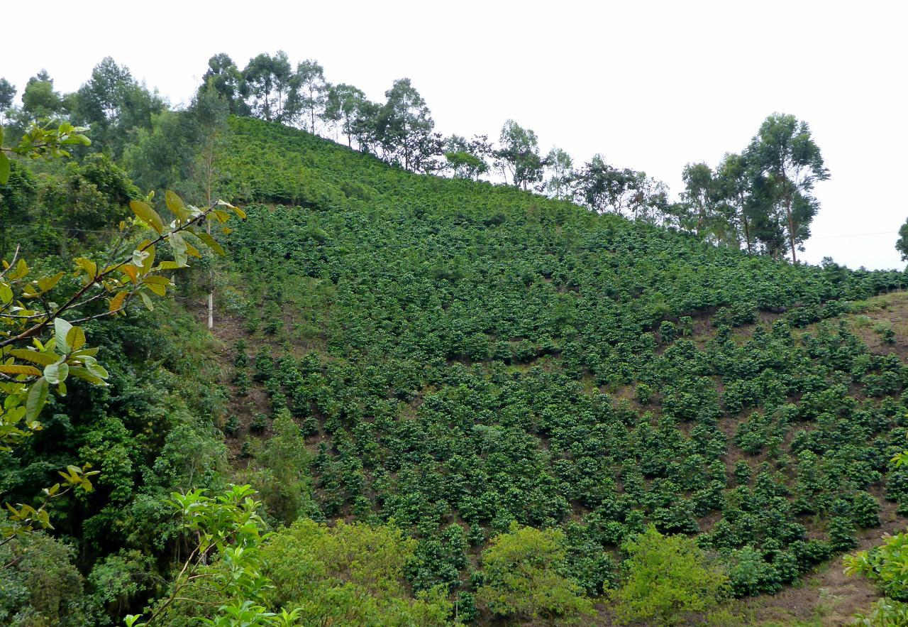 Colombian mountain grown coffee.