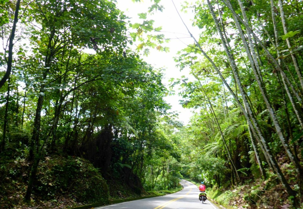 What a beautiful ride through the rainforest.