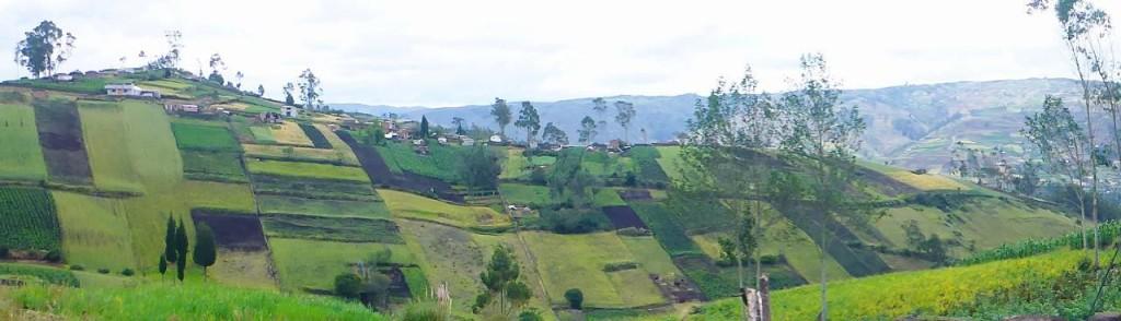 Very organized farming high in the Ecuadorian Andes.