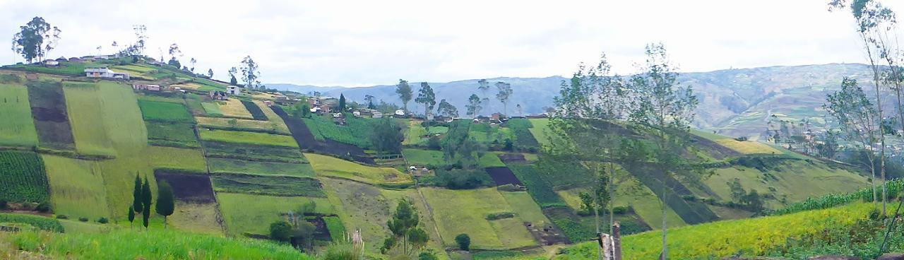 Very organized farming high in the Ecuadorian Andes.