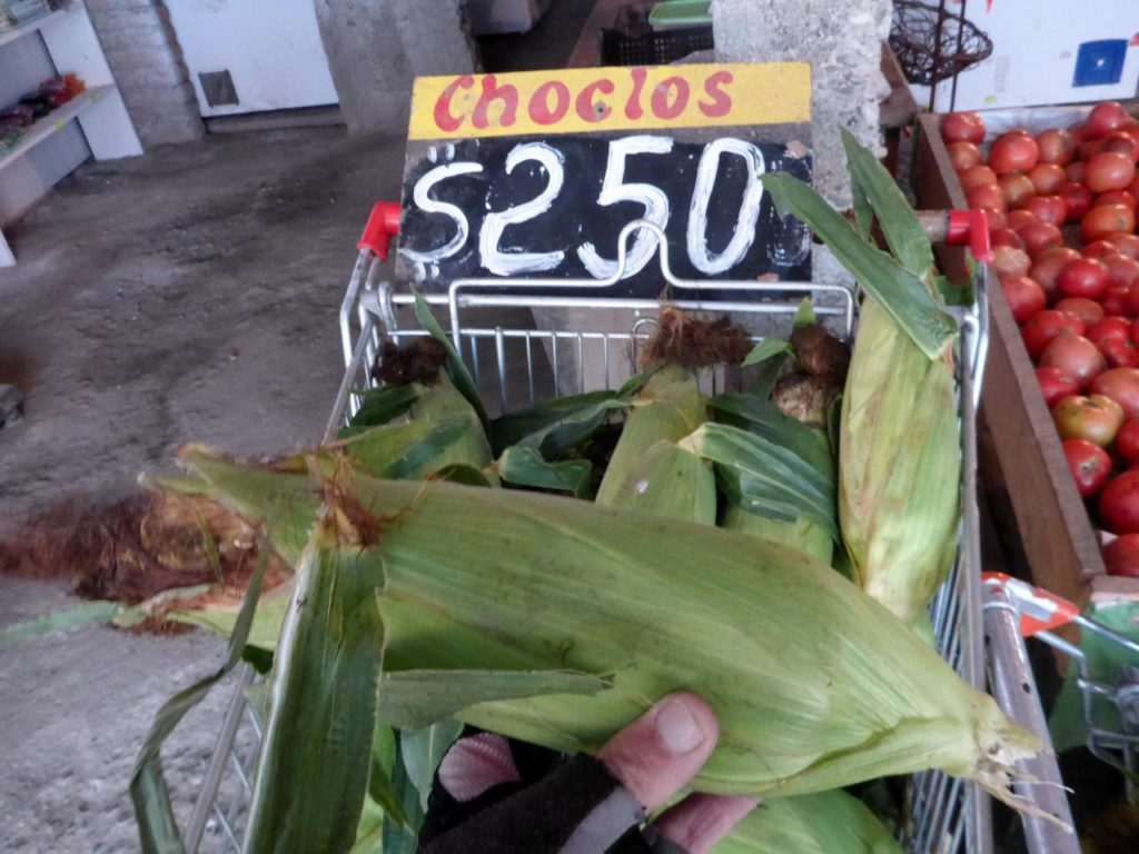 A huge ear of corn.