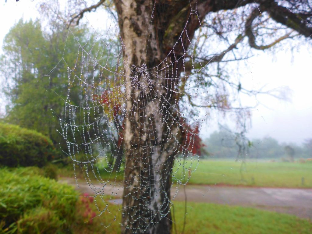 Mist on a spider web.