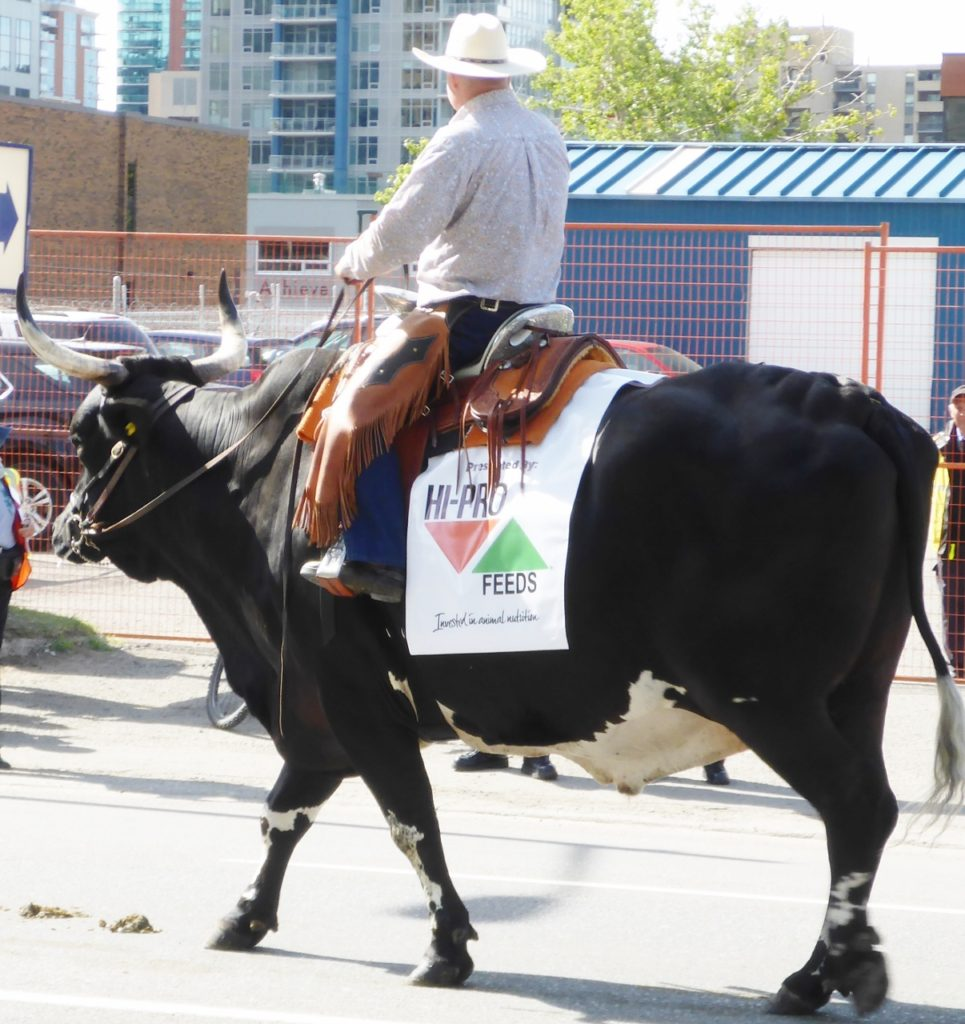 What a ride. We attended the Friday morning parade then the rodeo along with the chuckwagon races.