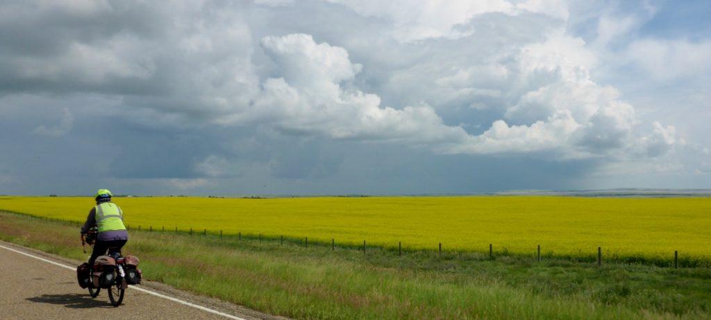 Beautiful fields of mustard.